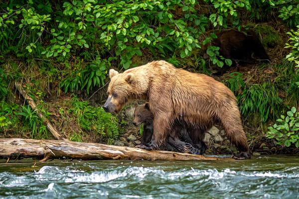 River Crossing Photography Art | Carol Brooks Parker Fine Art Photography