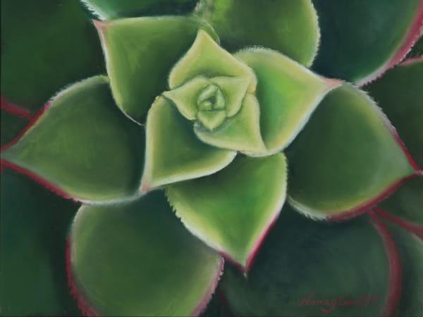Succulent paintings, Aeonium Kiwi, by Nancy Conant