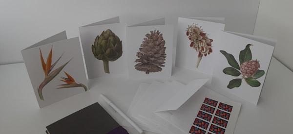 Notecards   Botanical Collection I   Joan Furlong   Vox Loci Studio