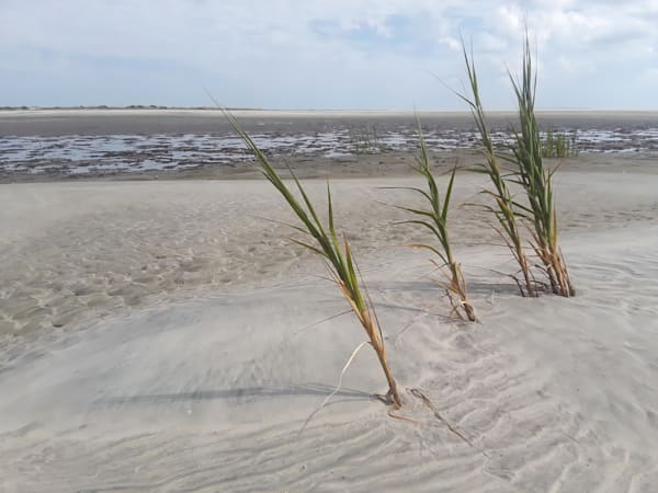 Beach Grass Puzzle Art | Joan Furlong | Vox Loci Studio