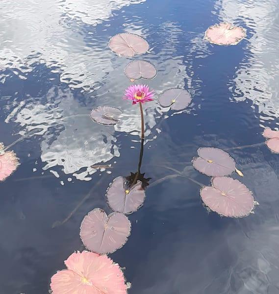 Note Cards   Water Lilies   Joan Furlong   Vox Loci Studio