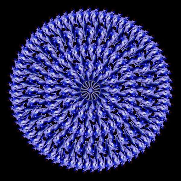 The Chicory Mandala Art | geometricphotographica