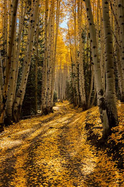 Follow The Yellow Brick Road  Photography Art   Jon Blake Photography