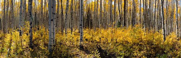 Golden Grove  Photography Art   Jon Blake Photography