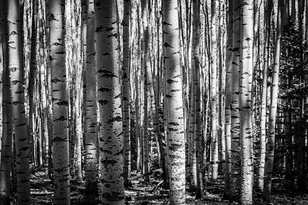 Trunk Lines  Photography Art | Jon Blake Photography