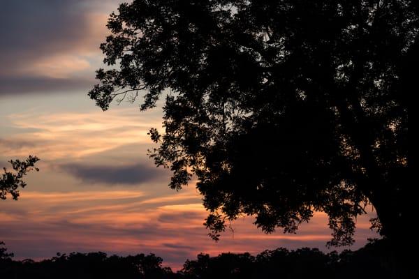 Sunset Silhouette Live Oak Tree, Damon, Texas