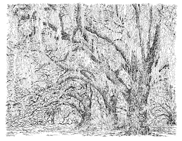 old oak grove (pathway), city park, new orleans:  fine art prints in elegant pen available for purchase online