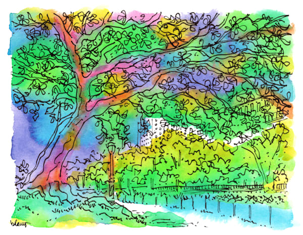 central park (tree by lake), new york city:  fine art prints in cheerful watercolor available for purchase online