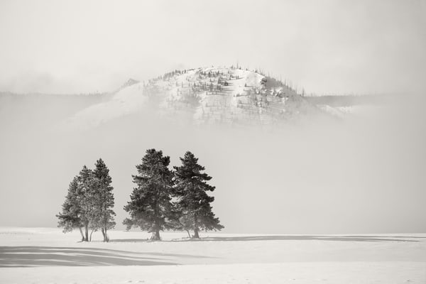 Trees In The Morning Fog B W D0 P0541 Yellowstone National Park Wy Usa Photography Art | Clemens Vanderwerf Photography