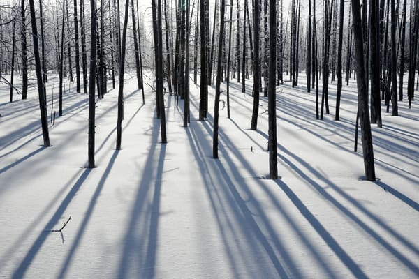 Sunlight And Shadows Among Trees And Snow S6 A6620 Yellowstone National Park Wy Usa Photography Art | Clemens Vanderwerf Photography
