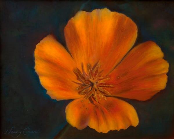 California Golden Poppy by Nancy Conant