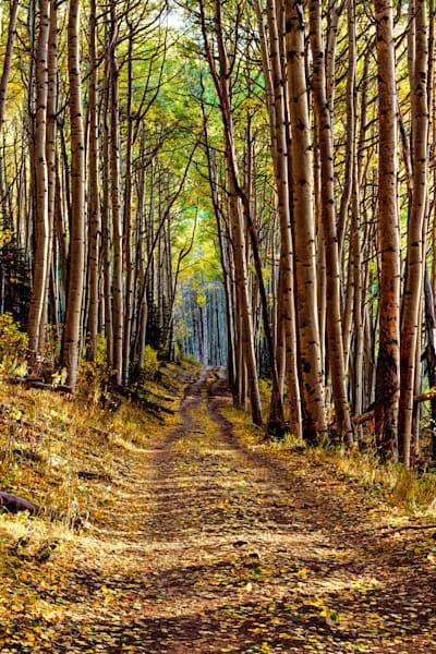 Blues Aspen Trail Photography Art   Monty Orr Photography