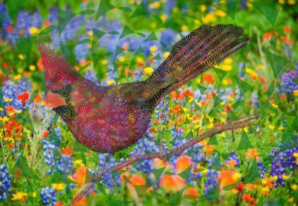 Cardinal bird Wall Art abstracts and photographs by Peter McClard