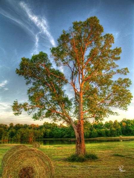 Tree In Field: Fine Art | Lion's Gate Photography
