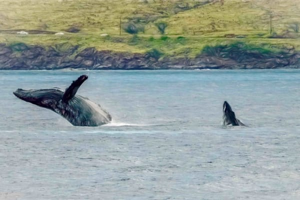 Mother And Calf Photography Art | Soaring Whales Photography LLC