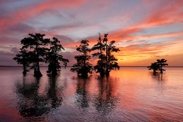Sunset With Cypress Trees 74 I6196 Lake Blue Cypress Florida Usa Photography Art   Clemens Vanderwerf Photography