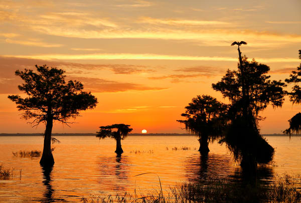 Sunrise With Osprey On Top Of Cypress Tree S6 A6927 Lake Blue Cypress Fl Usa Photography Art   Clemens Vanderwerf Photography