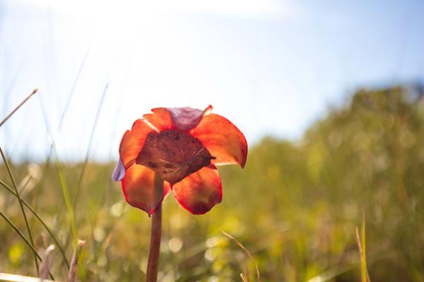 Picture Plant