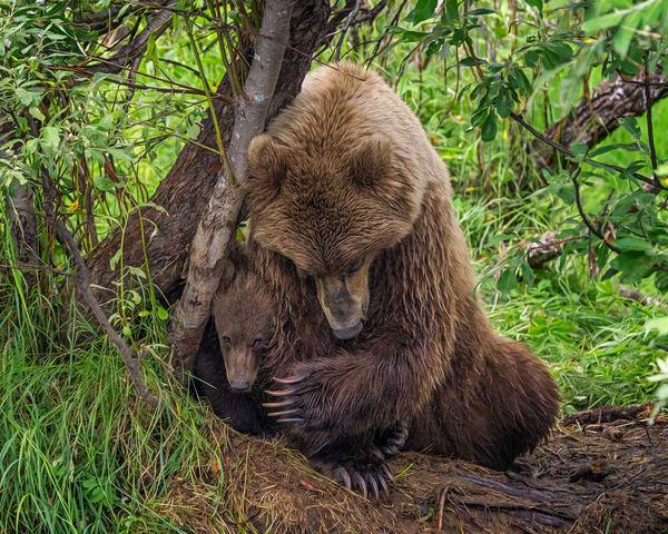 Bear Hug Photography Art | Carol Brooks Parker Fine Art Photography