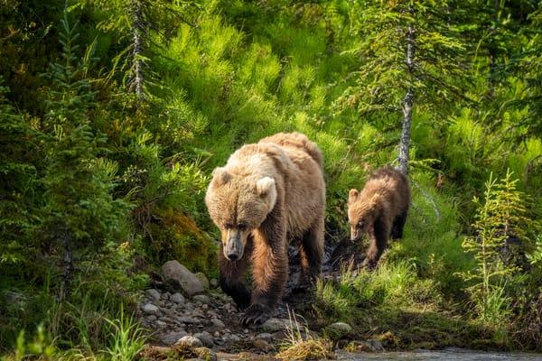 Sunlit Wilderness Photography Art | Carol Brooks Parker Fine Art Photography