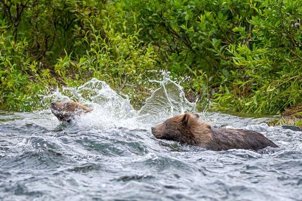 Sink Or Swim Photography Art | Carol Brooks Parker Fine Art Photography