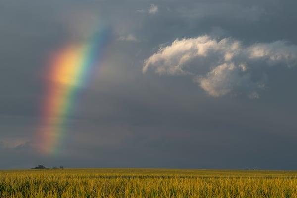 Chasing Rainbows #1
