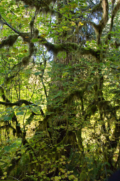 Growing On Trees 1 Photography Art | Leiken Photography