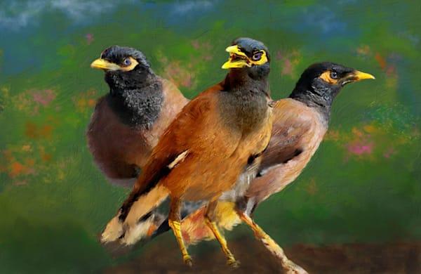 Mynah Birds Art | Rick Peterson Studio