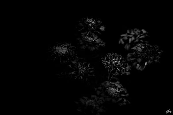 Flora & Darkness No11 Art   TG Photo
