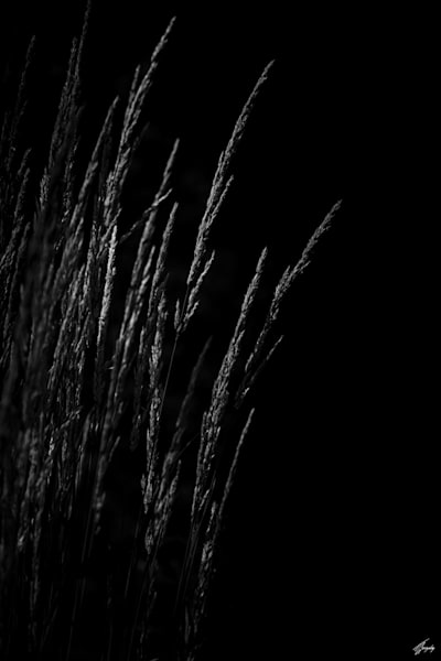 Flora & Darkness No12 Art   TG Photo