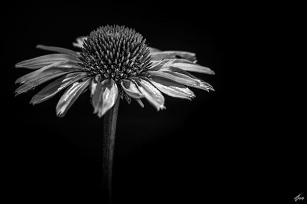 Flora & Darkness No13 Art   TG Photo
