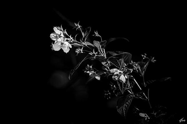 Flora & Darkness No14 Art   TG Photo