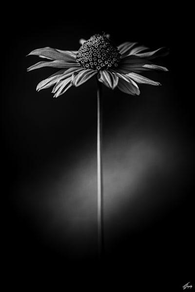 Flora & Darkness