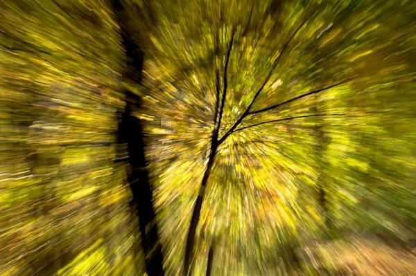 In The Forest Art   Norlynne Coar Fine Art