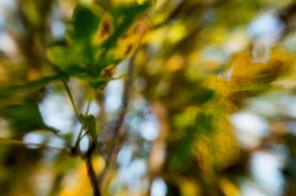 Leaf Art   Norlynne Coar Fine Art