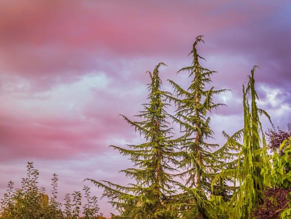 Pink Afternoon   Susan J Photography, LLC
