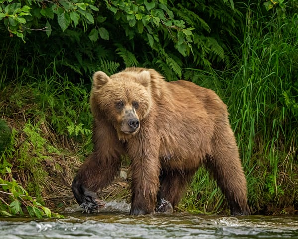 Scouting For Salmon Photography Art | Carol Brooks Parker Fine Art Photography