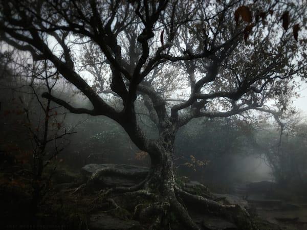 Craggy Birch - Color