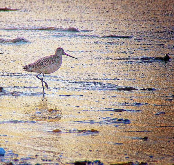 shoreline, shorebirds, ocean, godwit, jackierobbinsstudio, photographicprints