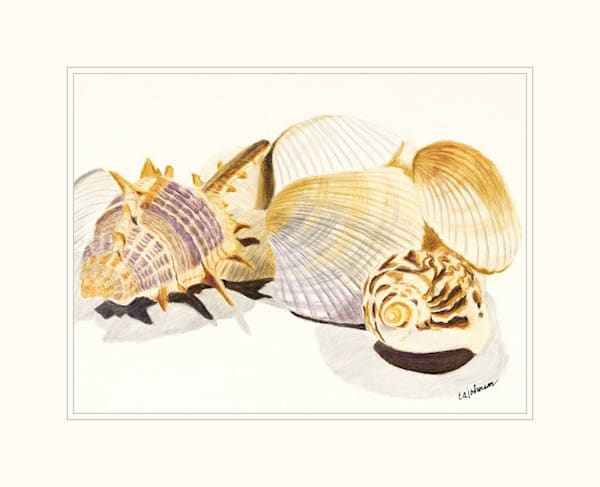 Shells Mini High Resolution Print