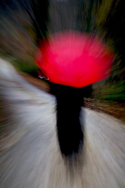 Umbrella In The Woods Art | Norlynne Coar Fine Art