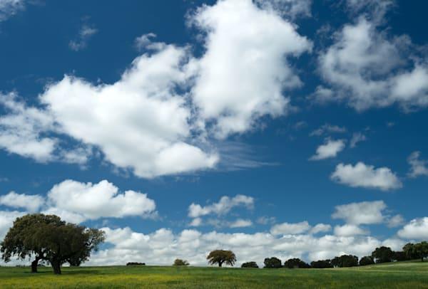 Tree And Clouds Art   Norlynne Coar Fine Art