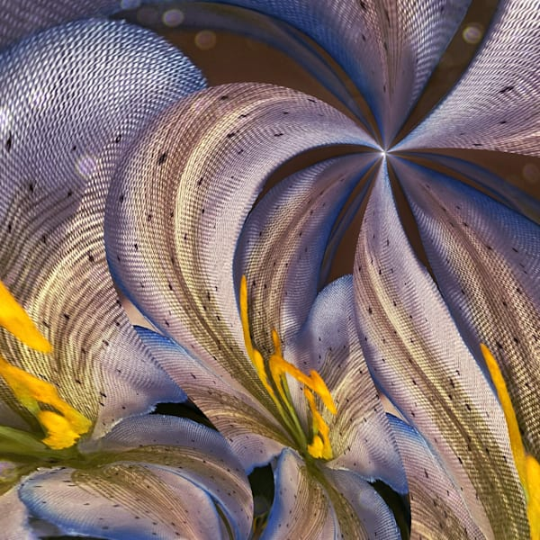 Circular Flow Photography Art | Kathleen Messmer Photography