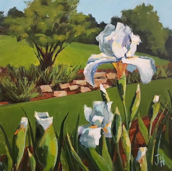 Presby Iris Garden Iv  Art   Jenn Hallgren Artist