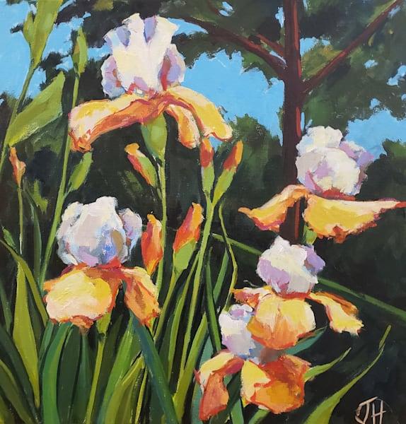 Orange Irises  Art   Jenn Hallgren Artist