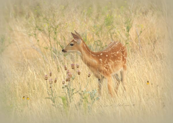 Fawn Sparkly Art