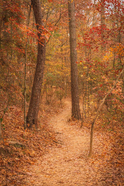 Path in the Woods   Susan J Photography   Fall colors