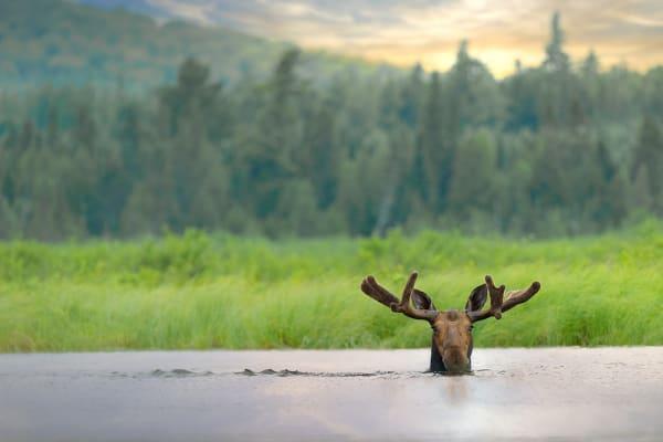 Mystical Moose Photography Art | http://www.mooseprintsgallery.com