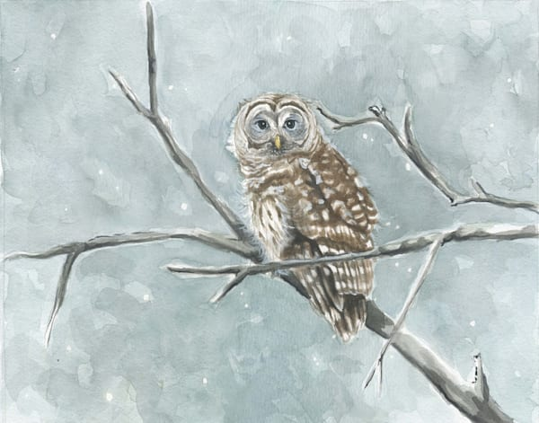 Chilly Barred Owl Original