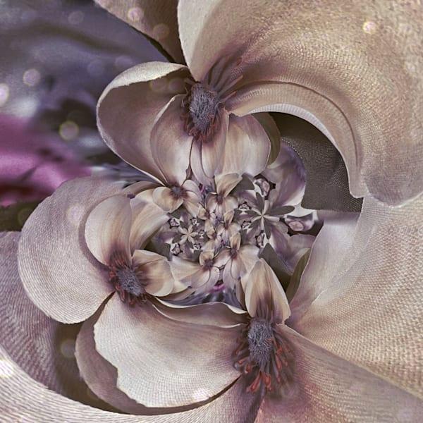 Circular Magnolia Photography Art | Kathleen Messmer Photography
